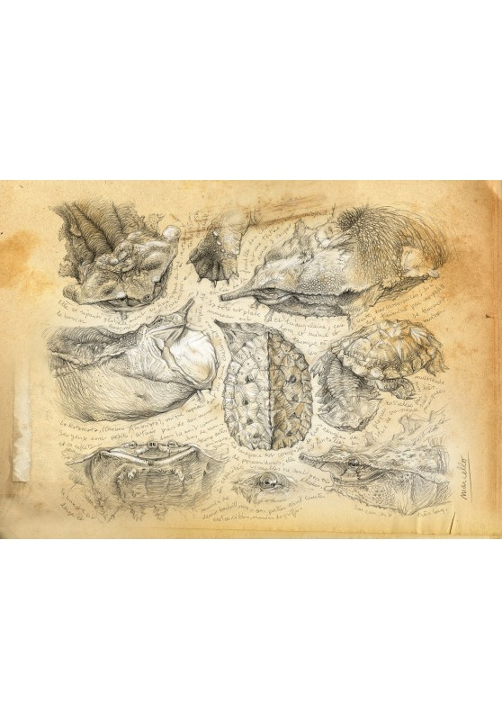 Marcello-art : Cartes de faire part 228 - Matamata