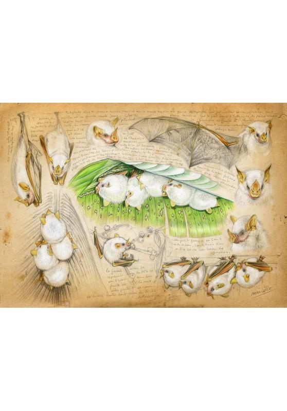 Marcello-art : Cartes de faire part 253 - Ectophylla alba