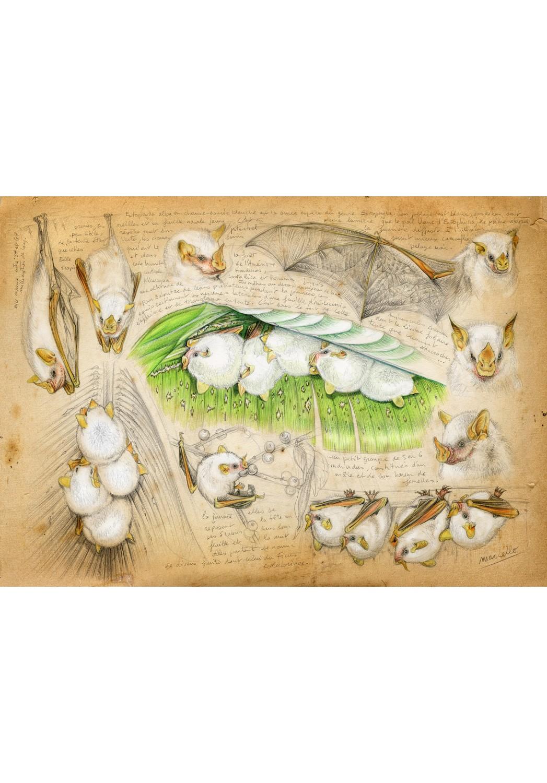 Marcello-art: Wish Card 253 - Ectophylla alba