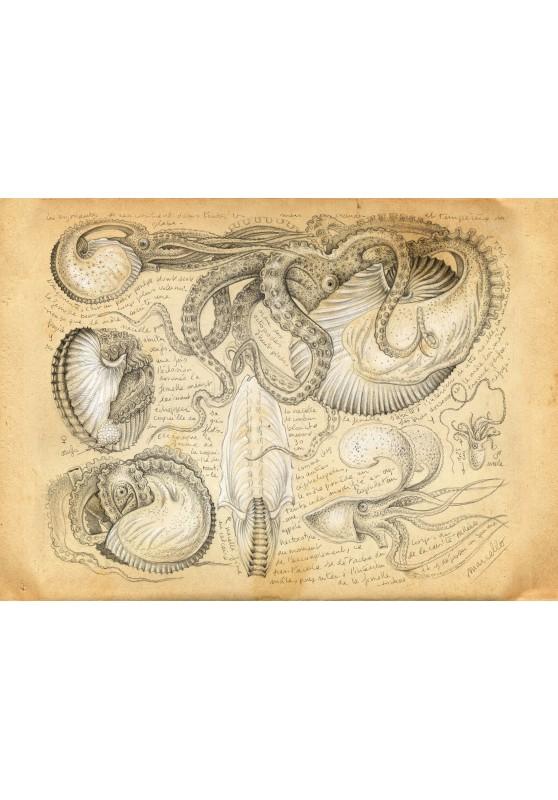 Marcello-art : Cartes de faire part 284 - Argonaute