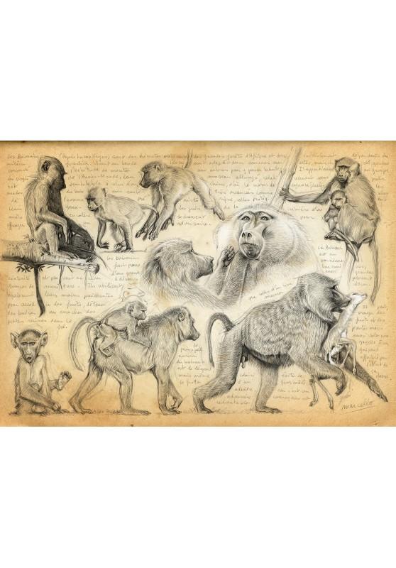 Marcello-art : Cartes de faire part 365 - Cynocephales
