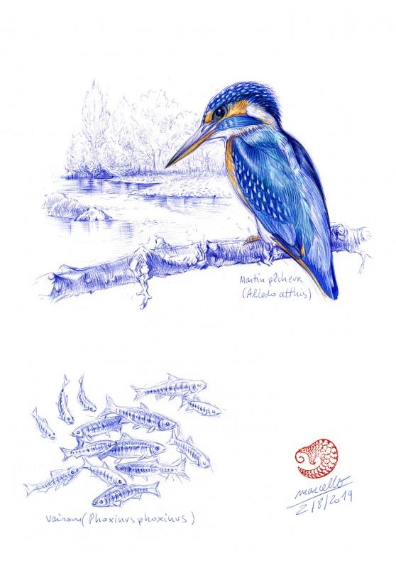 Marcello-art : Cartes de faire part 398 - Martin pêcheur