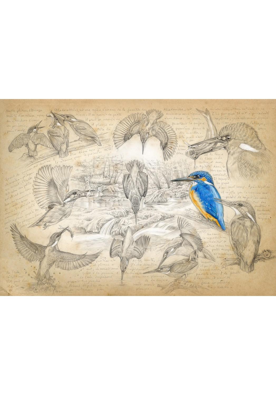 Marcello-art: Wish Card 399 - Alcedo atthis