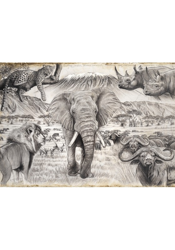 Marcello-art : Cartes de faire part 400 - Lost Africa