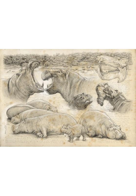 Marcello-art : Cartes de faire part 402 - Olmakau hippo