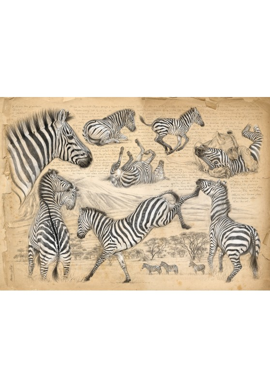 Marcello-art : Cartes de faire part 403 - Equus quagga