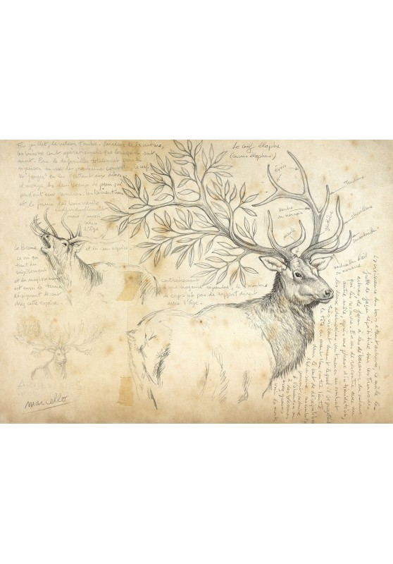Marcello-art: Wish Card 16 - Wood of deer