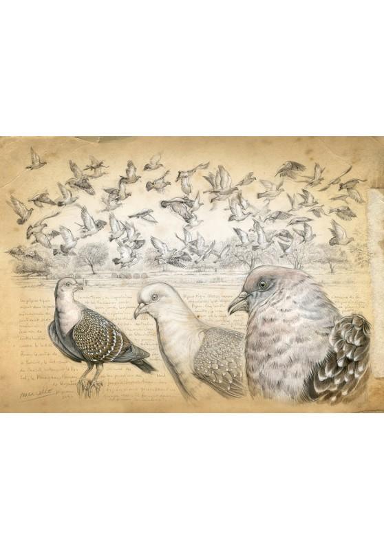 Marcello-art : Cartes de faire part 232 - Pigeon tigré