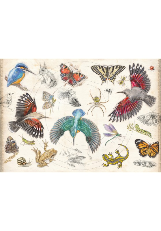 Marcello-art: On paper 422 - The naturalist's manual