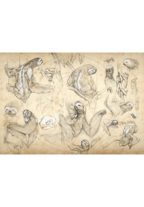 Marcello-art : Sur papier 424 - Paresseux tridactyle