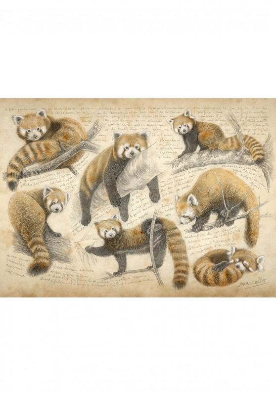 Marcello-art: Wish Card 423 - Red Panda