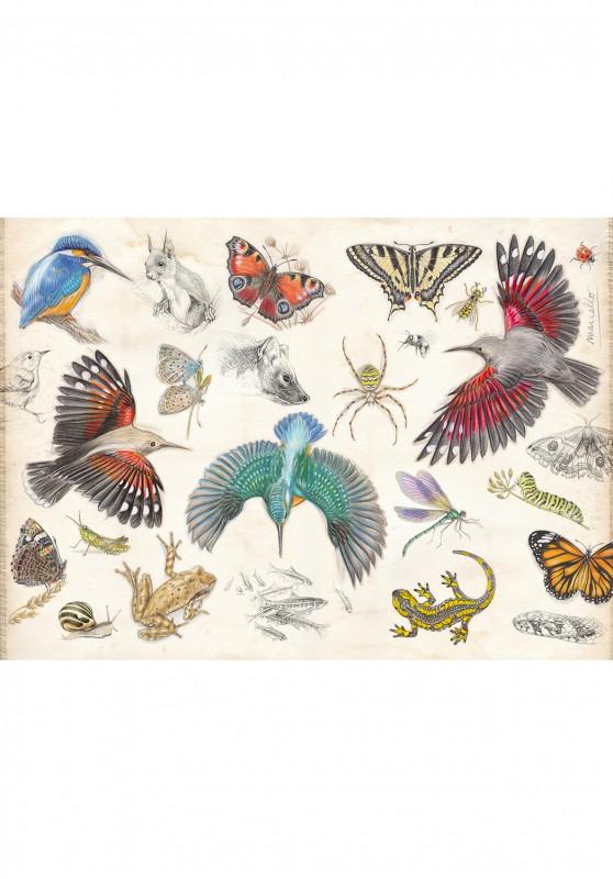 Marcello-art : Cartes de faire part 422 - Le Manuel Du Naturaliste