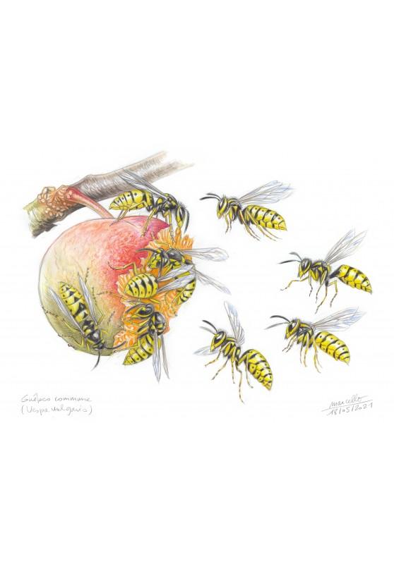 Marcello-art: Wish Card 432 - Common wasp (Vespa vulgaris)