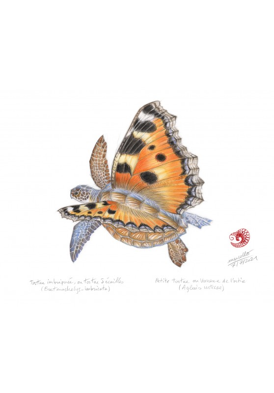 Marcello-art: Wish Card 438 - Butterfly turtle