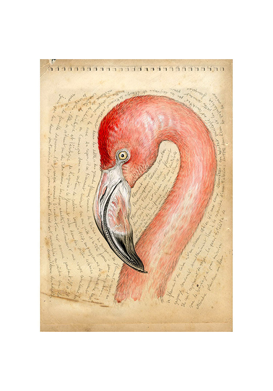 Marcello-art: Wish Card 36 - Pink flamingo