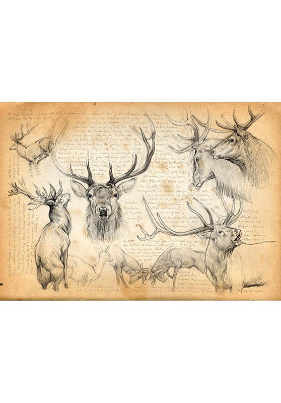 Marcello-art: Wish Card 52 - Red Deer 02