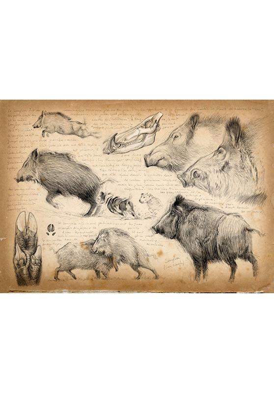 Marcello-art: Wish Card 58 - Boar