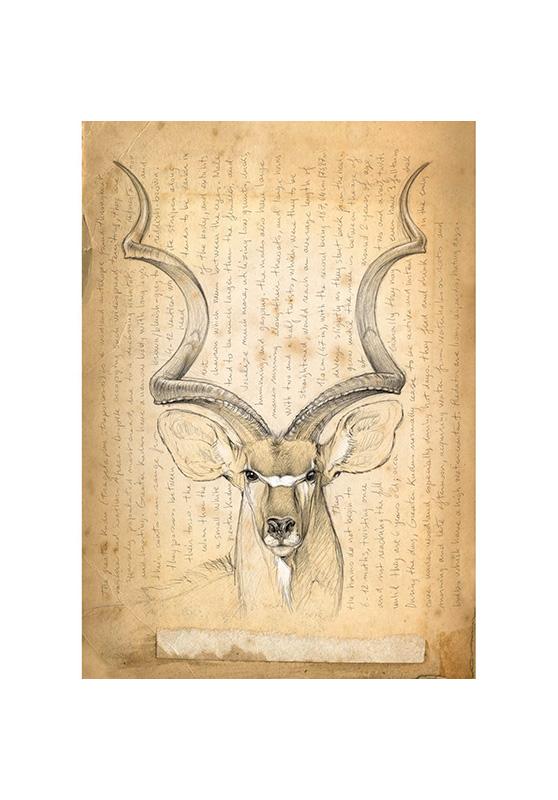 Marcello-art: Wish Card 170 - Greater kudu 02