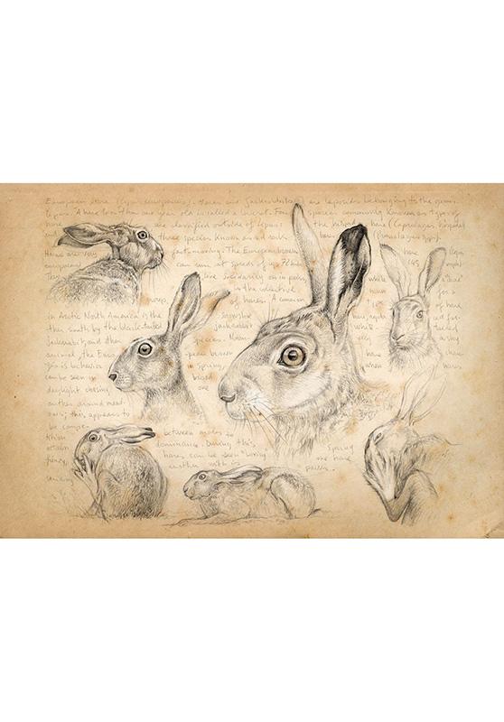 Marcello-art: Wish Card 172 - Hare 01