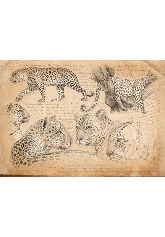 Marcello-art: Wish Card 180 - Leopard 09