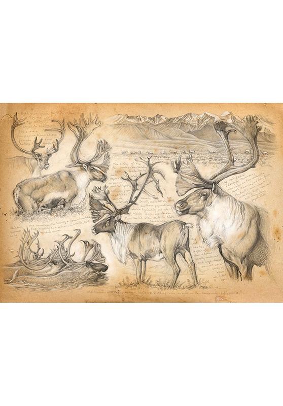 Marcello-art: Wish Card 190 - Mountain caribou