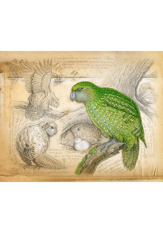 Marcello-art: Wish Card 192 - Strigops kakapo