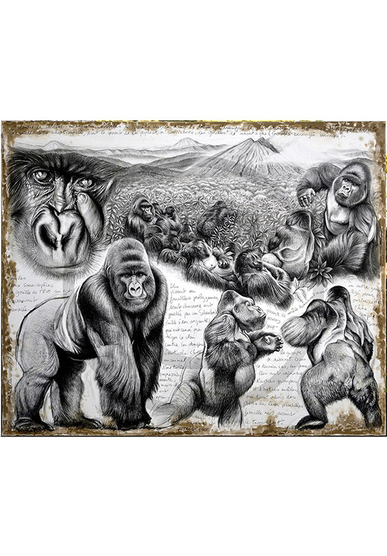 Marcello-art: Wish Card 301 - Virunga (Mountain Gorilla)