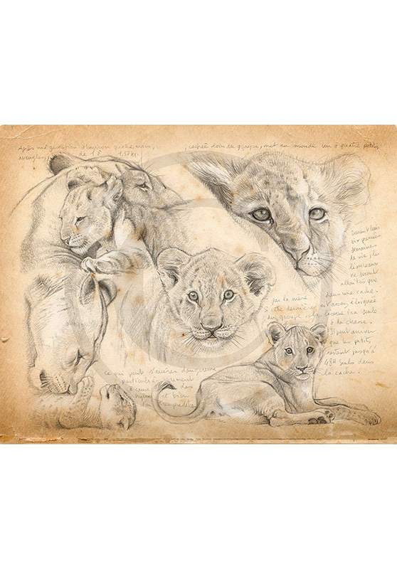 Marcello-art: Wish Card 330 - Young lions