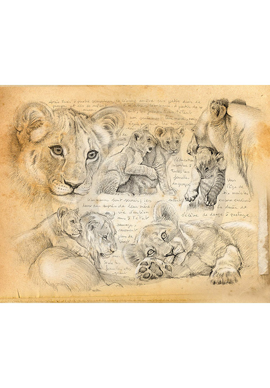Marcello-art: Wish Card 331 - Young lions