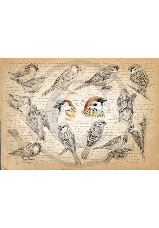 Marcello-art: Wish Card 333 - House sparrow and tree sparrow