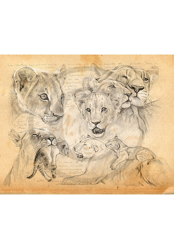 Marcello-art: Wish Card 335 - Young lions