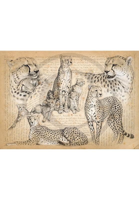 Marcello-art : Cartes de faire part 338 - Malaïka, Masai Mara