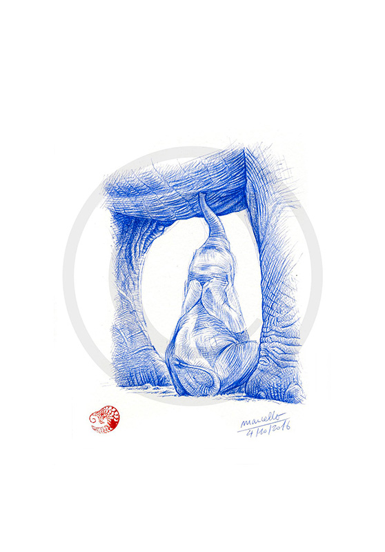 Marcello-art : Cartes de faire part 355 - Éléphanteau