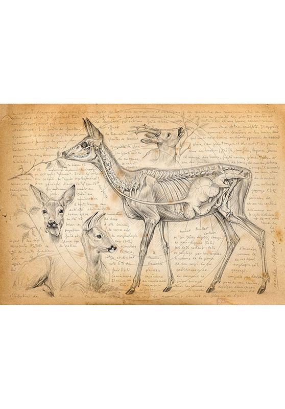 Marcello-art : Cartes de faire part 361 - Rumination du chevreuil