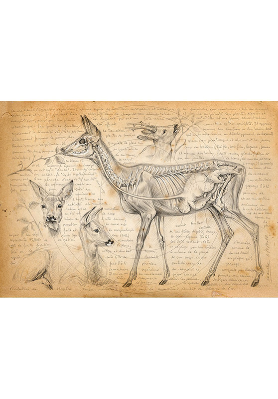 Marcello-art: Wish Card 361 - Rumination of deer
