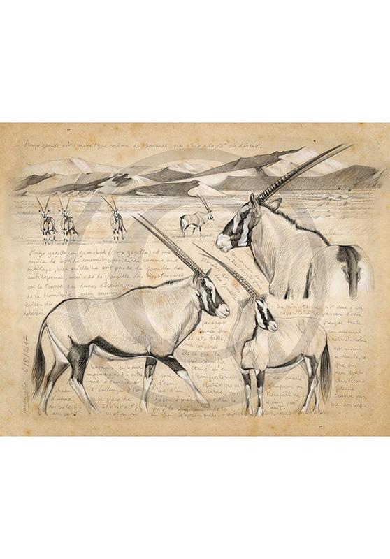 Marcello-art : Cartes de faire part 370 - Oryx gazelle