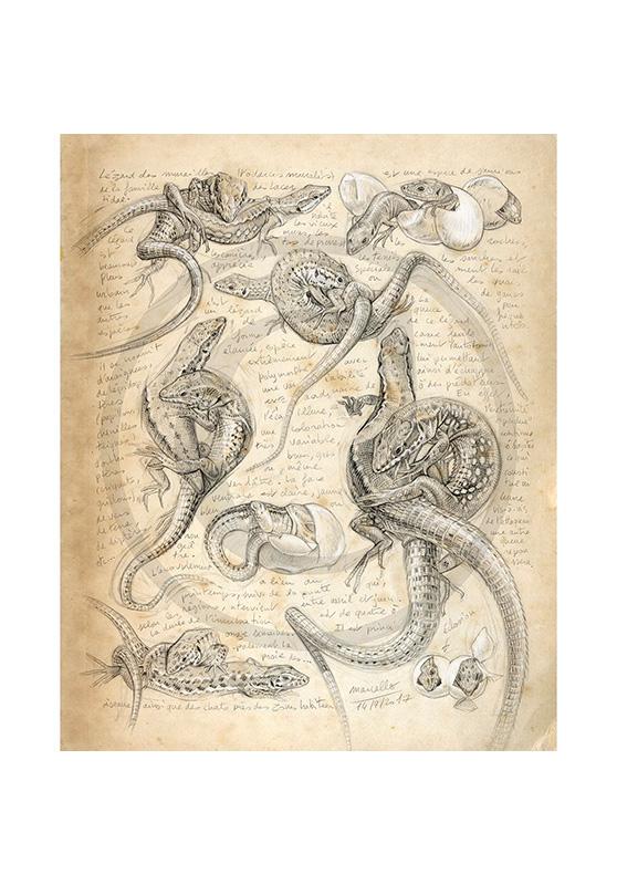 Marcello-art : Cartes de faire part 371 - Lézard de muraille