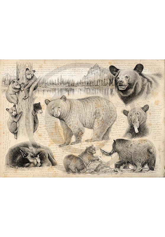 Marcello-art : Cartes de faire part 382 - Ours noir