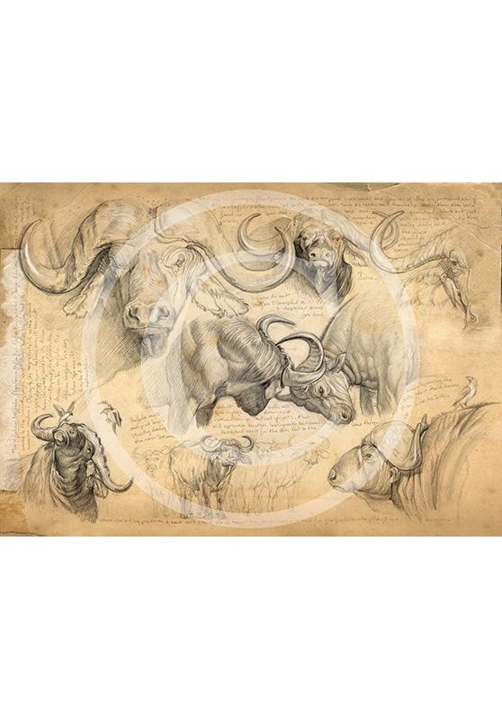 Marcello-art: Exclusive work 61 - H&H buffalo