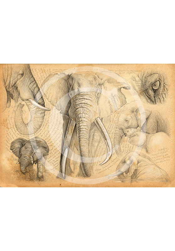Marcello-art: Exclusive work 62 - H&H elephant