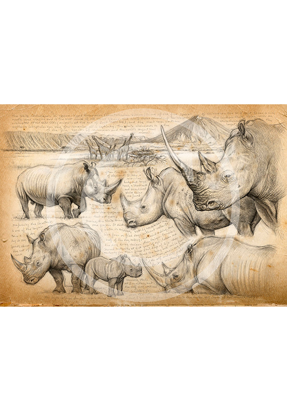 Marcello-art : Commandes exclusives 198 - H&H Big Five Rhinocéros blanc