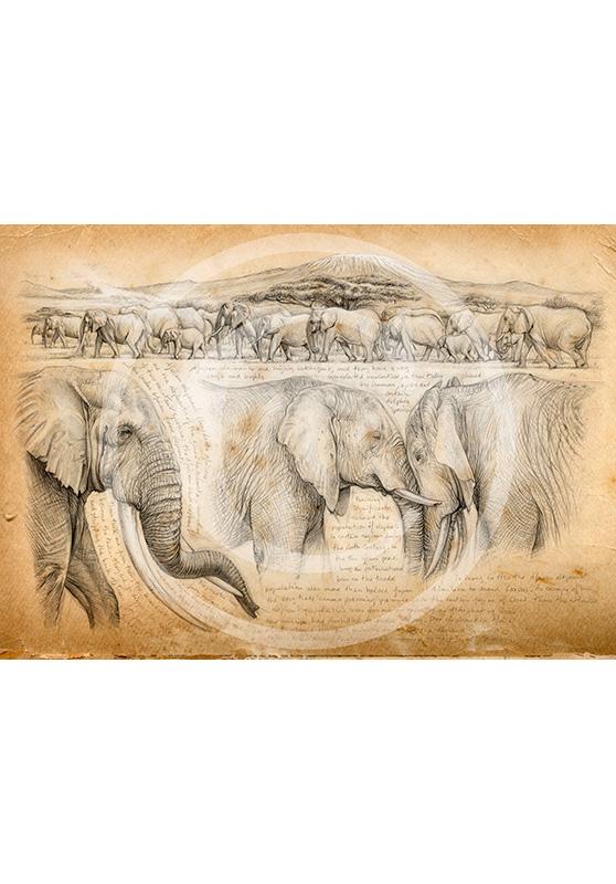 Marcello-art: Exclusive work 246 - H&H Big Five Elephant