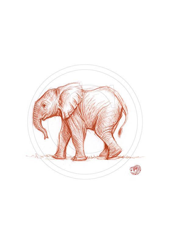 Marcello-art : Dessins au Bic 290 - Éléphanteau bain de boue