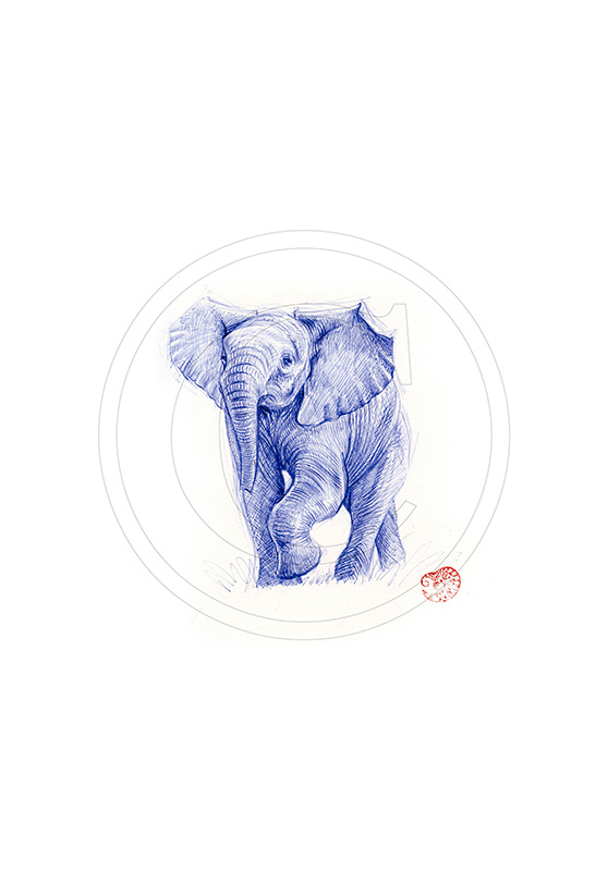 Marcello-art: Ballpoint pen drawing 293 - Baby elephant intimidating
