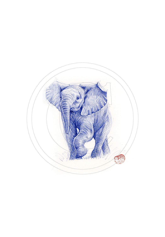 Marcello-art: Ballpoint pen drawing 293 - Baby elephant intimidating