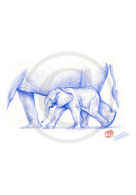 Marcello-art: Ballpoint pen drawing 311 - Baby elephant