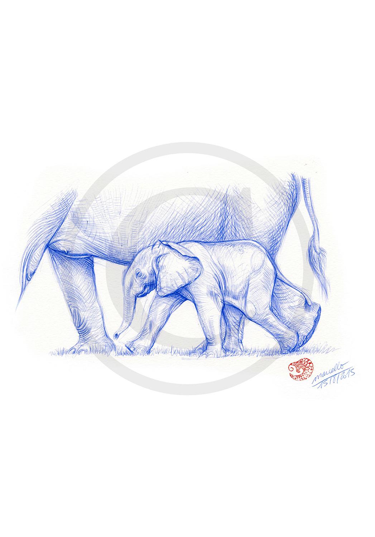 Marcello-art: Ballpoint pen drawing 311 - Baby elephant