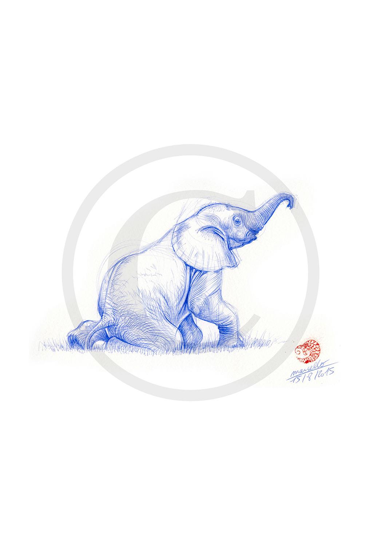 Marcello-art: Ballpoint pen drawing 312 - Baby elephant