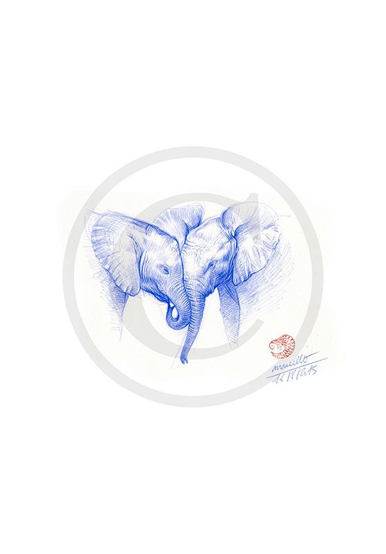 Marcello-art: Ballpoint pen drawing 313 - Baby elephant
