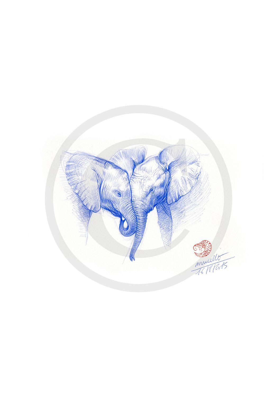 Marcello-art: Ballpoint pen drawing 313 - Baby elephant